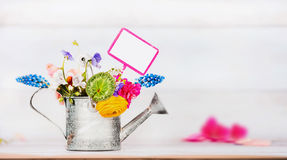 Gardening background with Watering can , garden flowers and gardening sign Stock Photo