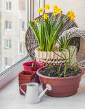 Gardening on the balcony Royalty Free Stock Images