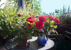 Gardening on the balcony, potted plants, herbs and red roses in Royalty Free Stock Images