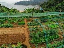 An organic farm on the Lantau Island, Hong Kong. Gardening beds in a small local organic farm stock image