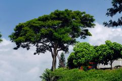 Gardening on the Big Island Royalty Free Stock Photography