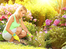Gardening. Blonde young woman planting flowers in garden Stock Image
