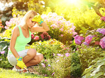 Gardening. Blonde young woman planting flowers in garden Royalty Free Stock Photos
