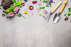 Gardening border with various flowers plant and garden tools on gray stone background, top view. Place for text Stock Photography