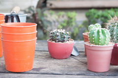 Gardening cactus in pot plant on wooden table Stock Photography