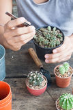 Gardening cactus in pot plant on wooden table Royalty Free Stock Photography