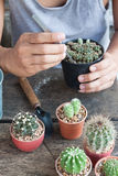 Gardening cactus in pot plant on wooden table Stock Image