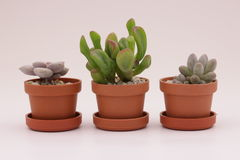 Gardening cactus and succulents. And miniature garden, drives your creativity Royalty Free Stock Photography