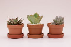 Gardening cactus and succulents. And miniature garden, drives your creativity Royalty Free Stock Photos