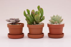 Gardening cactus and succulents. And miniature garden, drives your creativity Stock Photography
