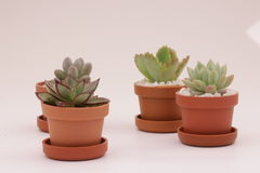 Gardening cactus and succulents. And miniature garden, drives your creativity Stock Image
