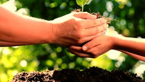 Gardening child and mom stock video