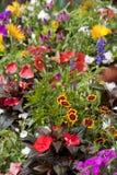 Flowerpot Gardening Royalty Free Stock Photos