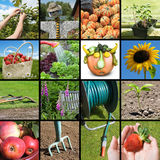Gardening collage Royalty Free Stock Photo