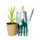 Gardening composition with green plant in the peat pot and garden tools. Isolated on white background Royalty Free Stock Photo