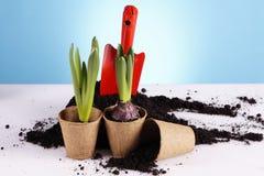 Gardening Concept! Stock Photo