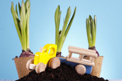 Gardening Concept! Royalty Free Stock Images