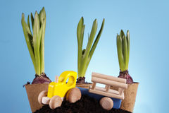 Gardening Concept! Stock Photos