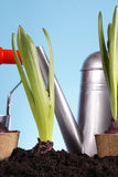 Gardening Concept! Royalty Free Stock Photo