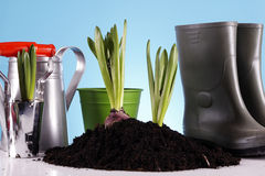 Gardening Concept! Stock Photography