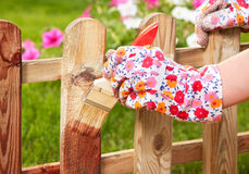 Gardening concept. Applying protective varnish to a wooden fence Royalty Free Stock Images