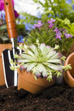 Gardening concept closeup on flower Stock Images