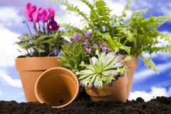 Gardening concept closeup on sky background Stock Photos