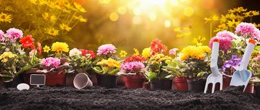 Gardening Concept. Garden Flowers and Plants on a Sunny Background stock photography