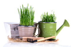 Gardening concept. Stock Photography
