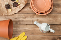 Gardening Concept. Gladiolus Bulbs. Watering Can Stock Image