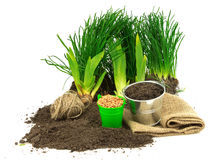 Gardening concept with grass, ground, seeds, metal bucket, sack, Royalty Free Stock Image