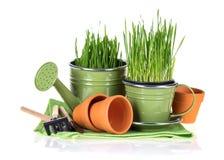 Gardening concept. Stock Photos