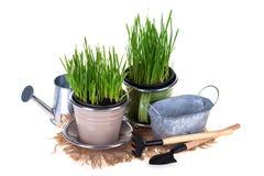 Gardening concept. Royalty Free Stock Photos