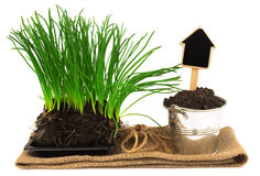 Gardening concept with grass, soil in the metal bucket on the sa Royalty Free Stock Photography