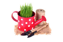 Gardening concept. Royalty Free Stock Photo