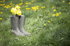 Gardening concept Stock Image