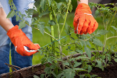 Gardening concept Stock Photo