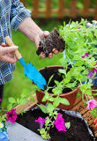 Gardening concept Stock Photos