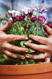 Gardening concept Royalty Free Stock Photo