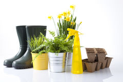 Gardening concept Royalty Free Stock Images