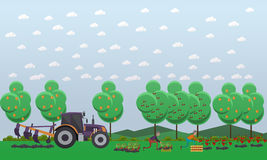 Gardening concept vector illustration in flat style. Gardeners males picking tomatoes, strawberry and putting them into wooden box. Tractor tilling soil Stock Photo