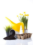 Gardening. Concept with watering can and garden plant royalty free stock photos