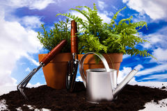 Gardening concept, work tools, plants Stock Images