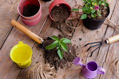 Gardening conception,people preparing plant to grow Royalty Free Stock Images
