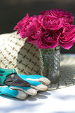 Gardening cutters gloves Roses Royalty Free Stock Photo