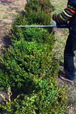 Gardening, cutting hedge Stock Photography