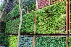 Outdoor vertical garden floral in a wooden planter box at the wall, variety of plants in vertical garden texture wall. Gardening,decorated wall, outdoor vertical royalty free stock photography
