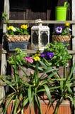 Gardening decorating flower Royalty Free Stock Photo