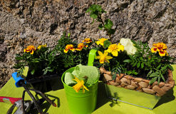 Gardening decorating flower spring Stock Photography