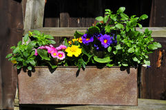 Gardening decorating flower spring Stock Photo